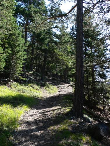Auf seinen Fluchten geriet er auf den Weg nach La Rêche. Er ging über die Wiesen, dann trat er in einen Kiefernwald ein. Hier genoss er eine absolute Einsamkeit und Geborgenheit...