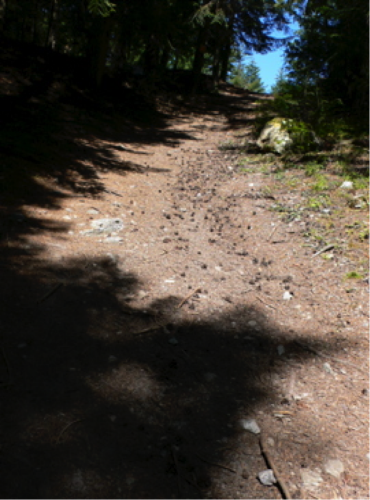Er kletterte den Weg hinauf, wobei ihn die runden Zapfen behinderten, die unter seinen Sohlen wegrollten.